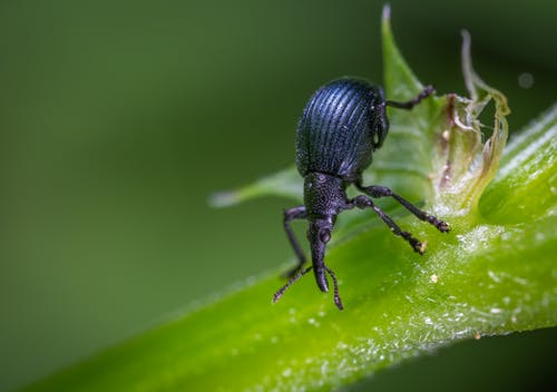 Gratis stockfoto met close-up, insect, jong, kever