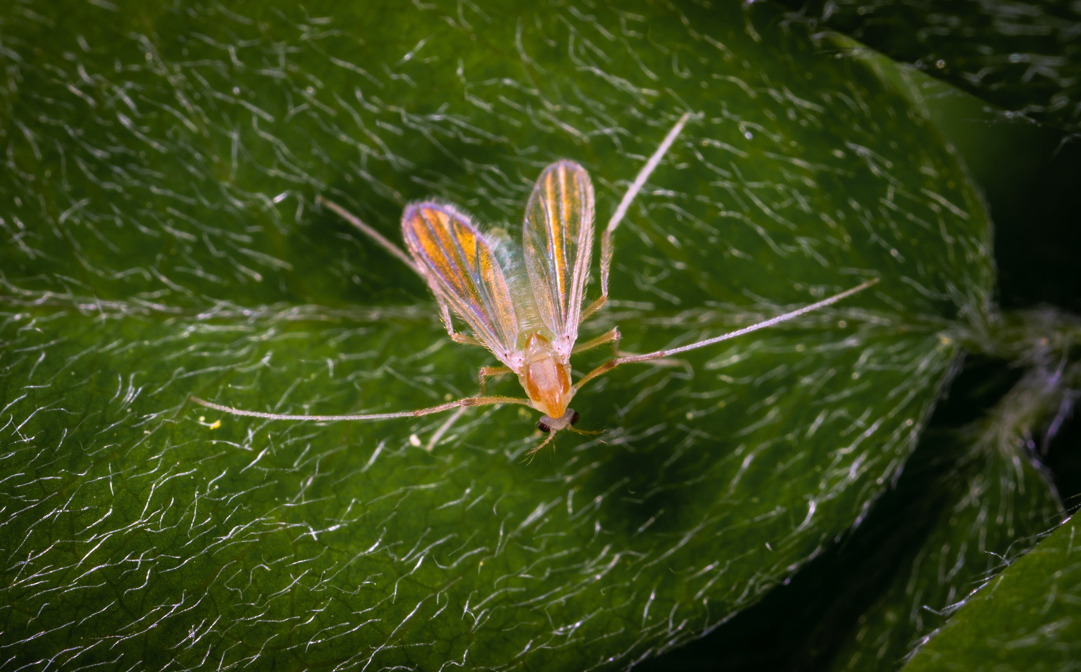 Brown Insect On Leaf