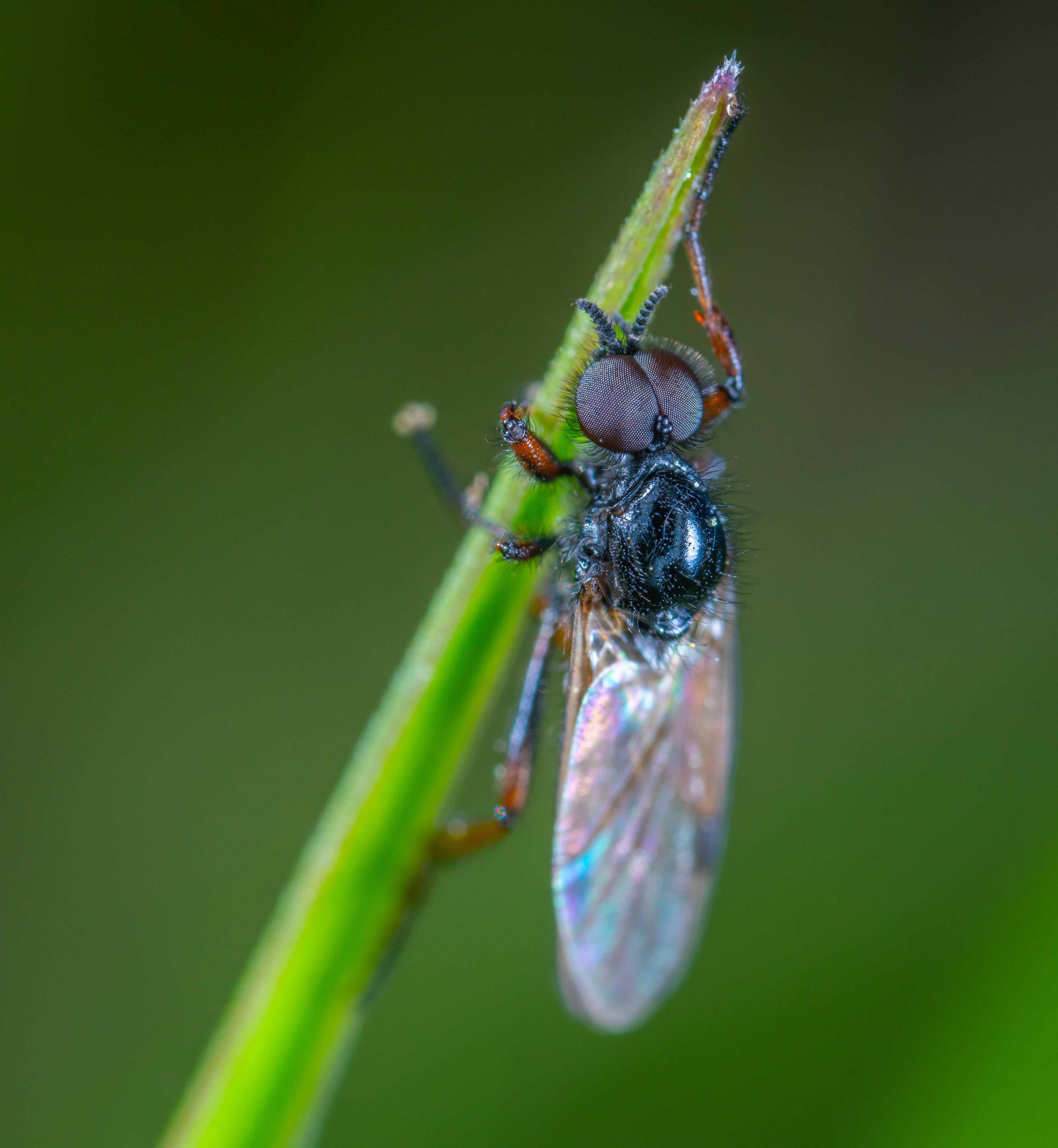 Black Fly Close-up Photography