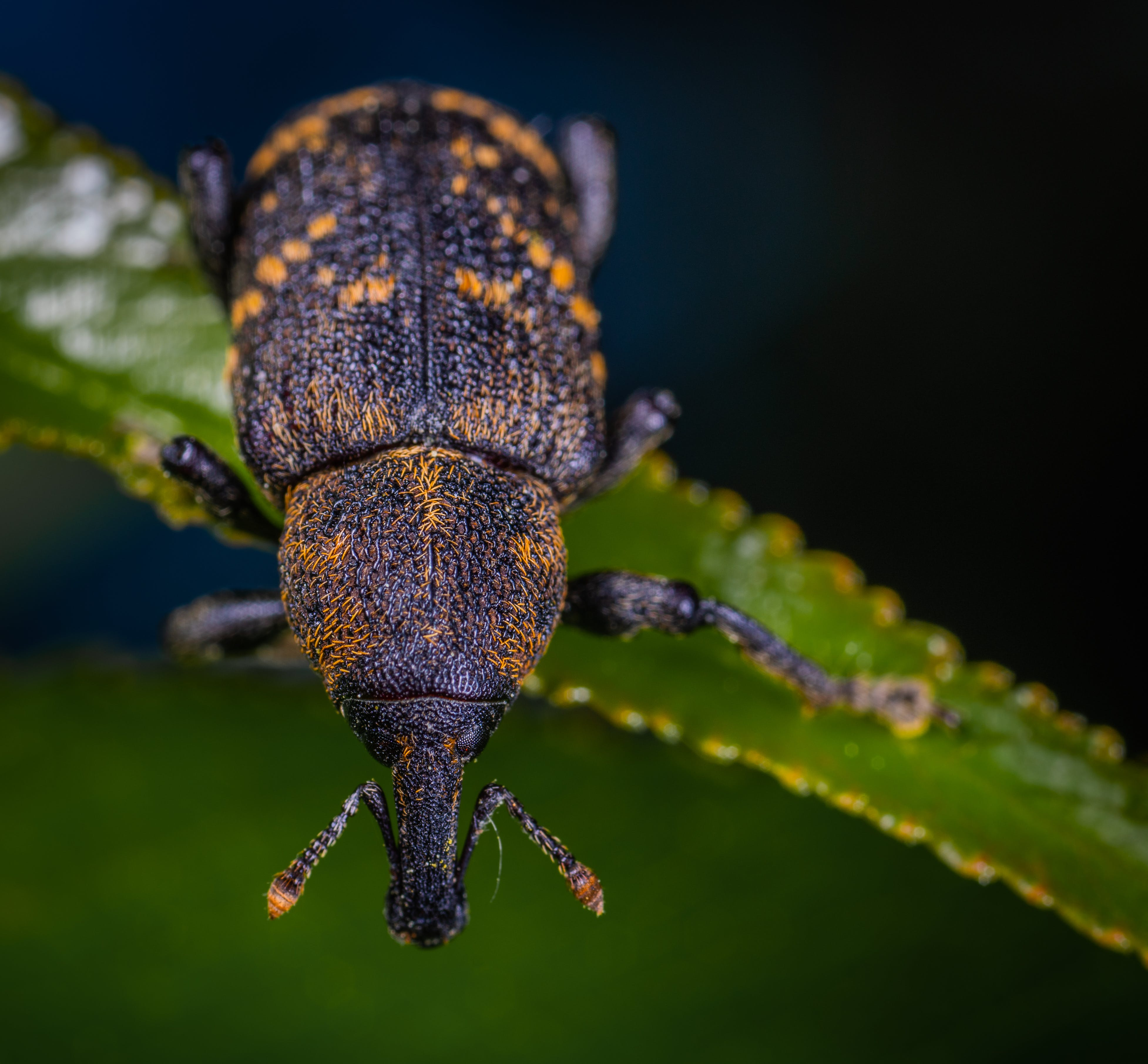 Close-up Photography Of Insect On Leaf