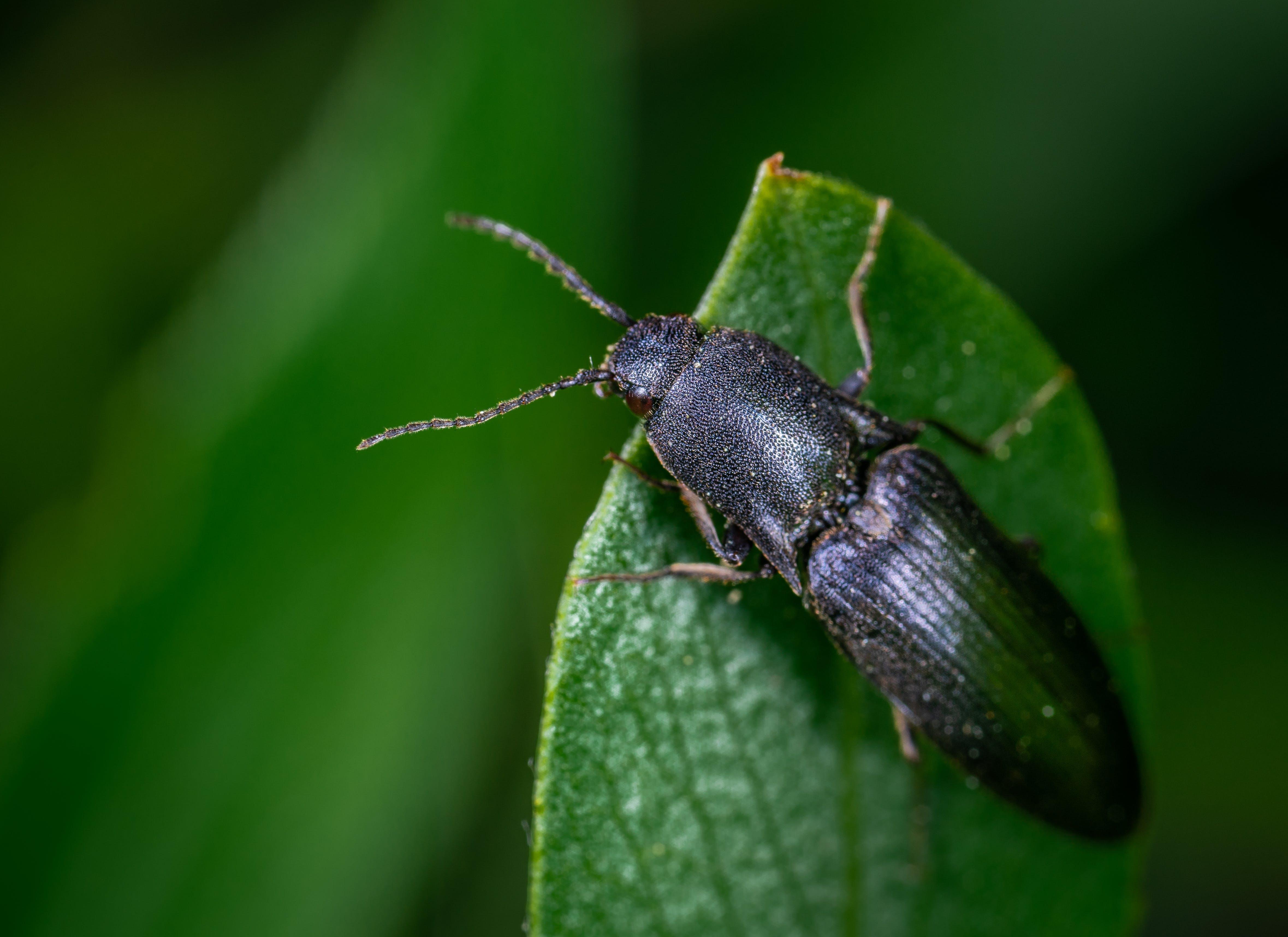 Black Bug On Leaf