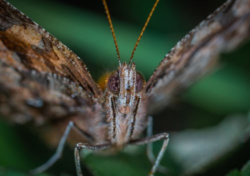 Brown Butterfly Close-up Photography