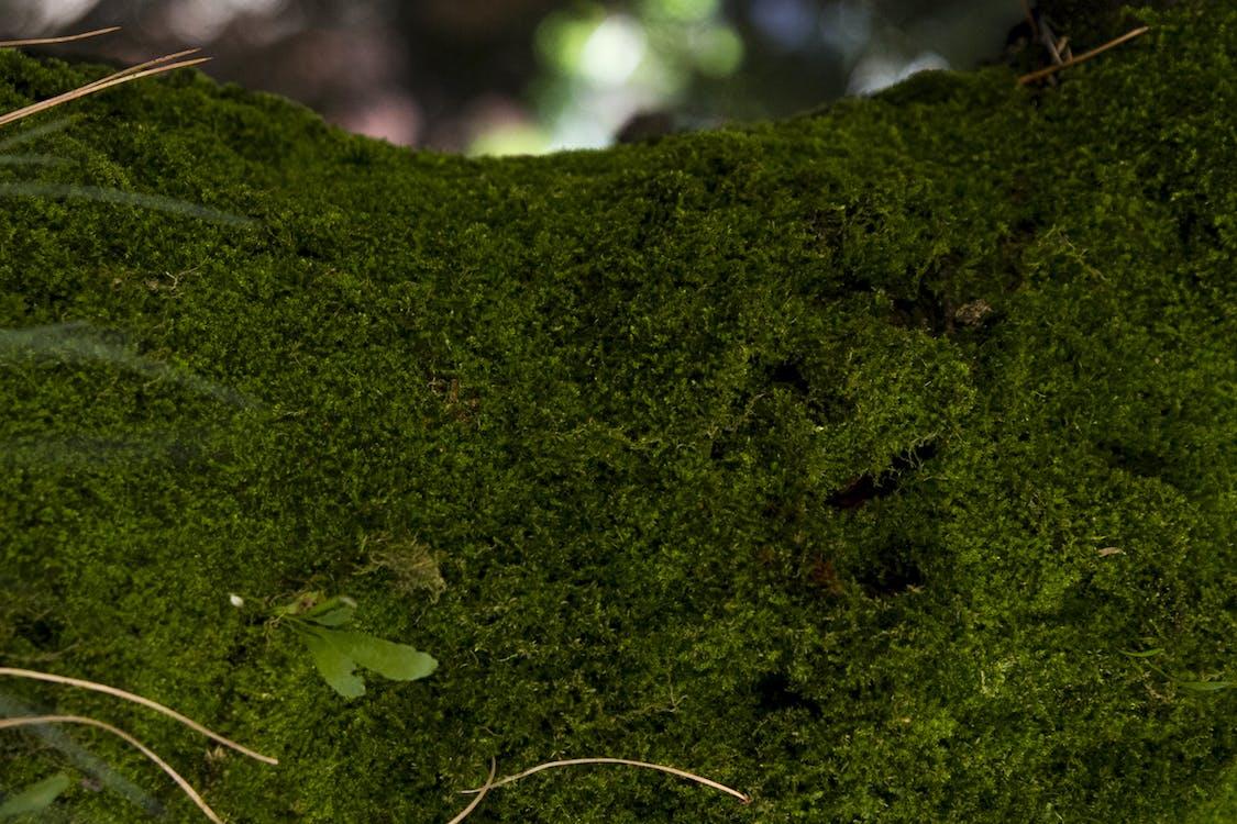 大自然, 廠, 植物