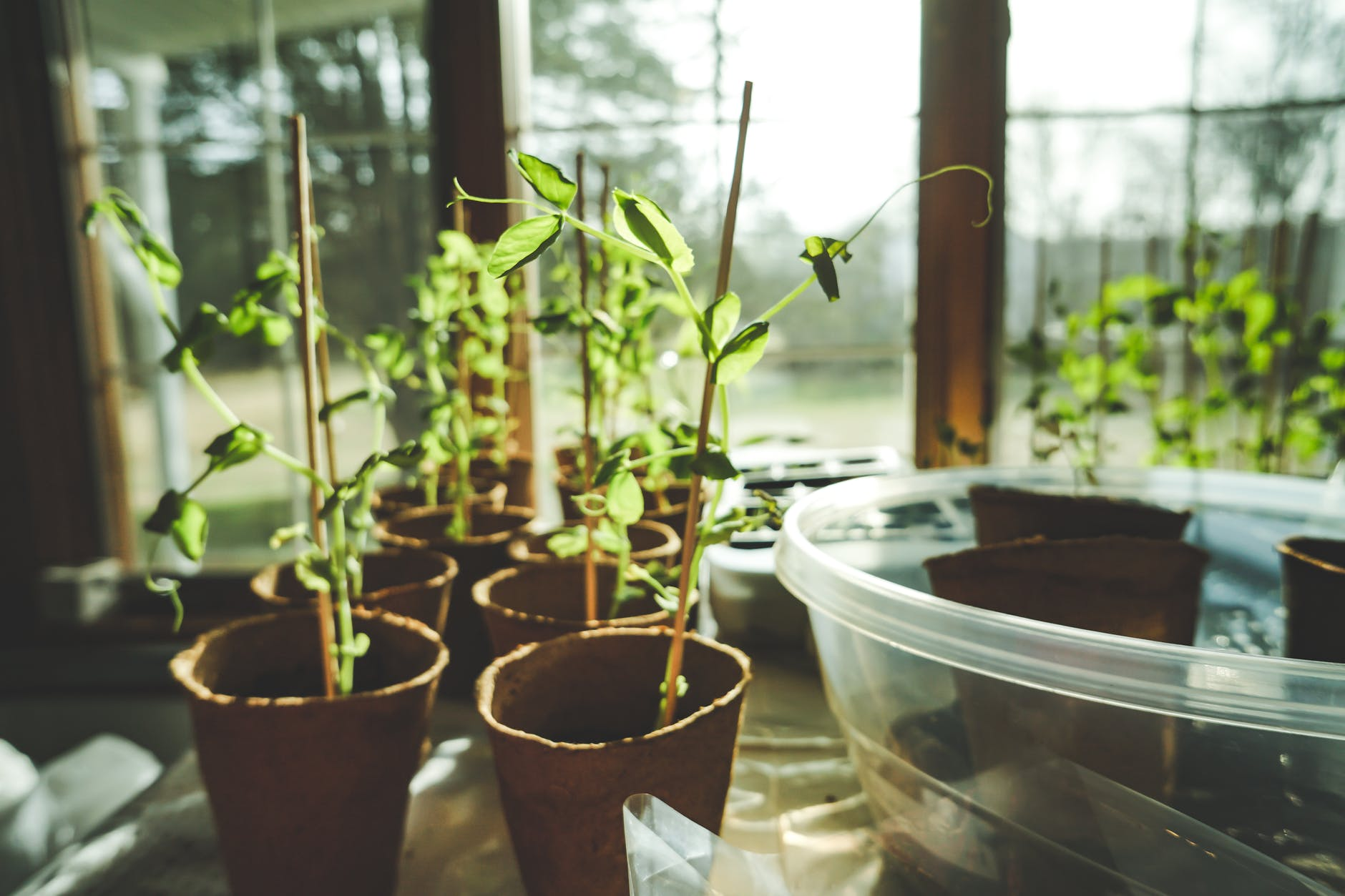 potted green leaf plants