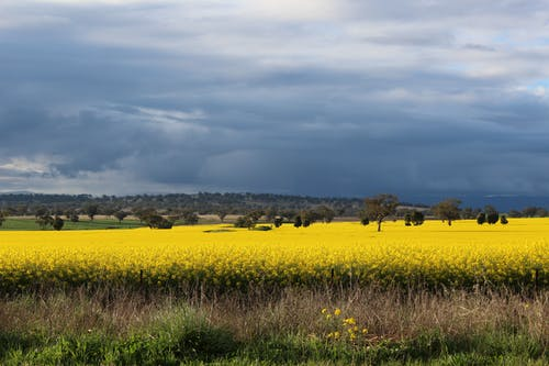 Kostnadsfri bild av åkermark, blommor, bondgård, fält