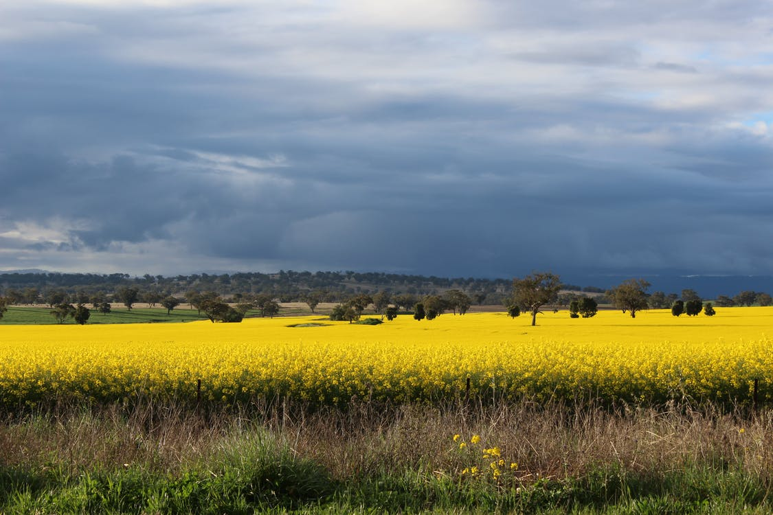 Photography of Flower Field Under Cloudy Sky