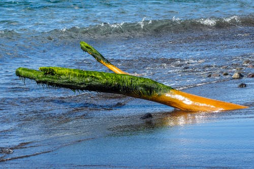 Free stock photo of caribbean sea, driftwood, moss