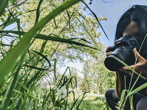 꽃, 사진작가, 자연 사진의 무료 스톡 사진
