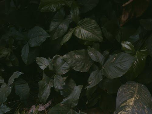 Gratis lagerfoto af grøn, naturfotografering, plante, vækst