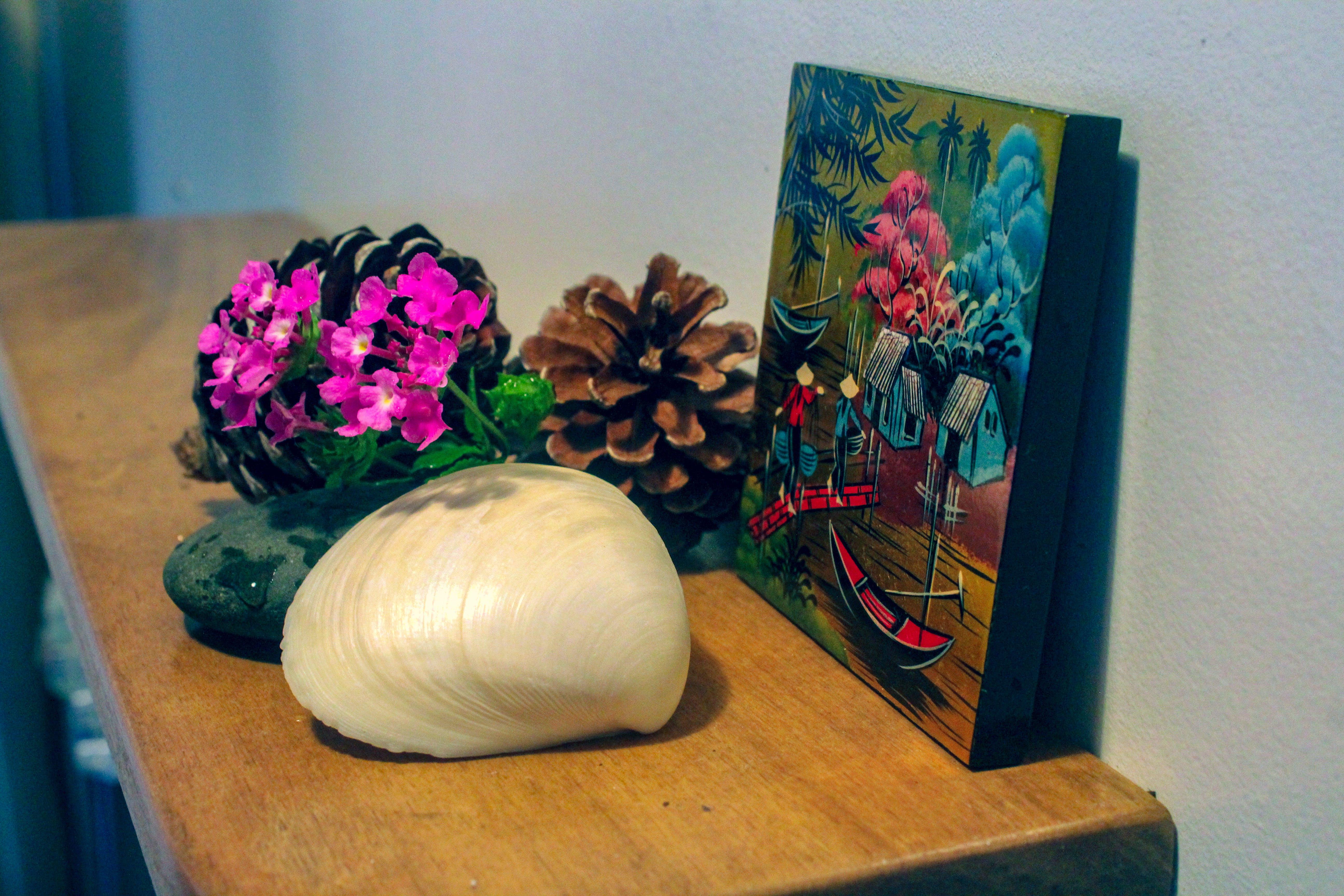 Free stock photo of #flowersonshelf