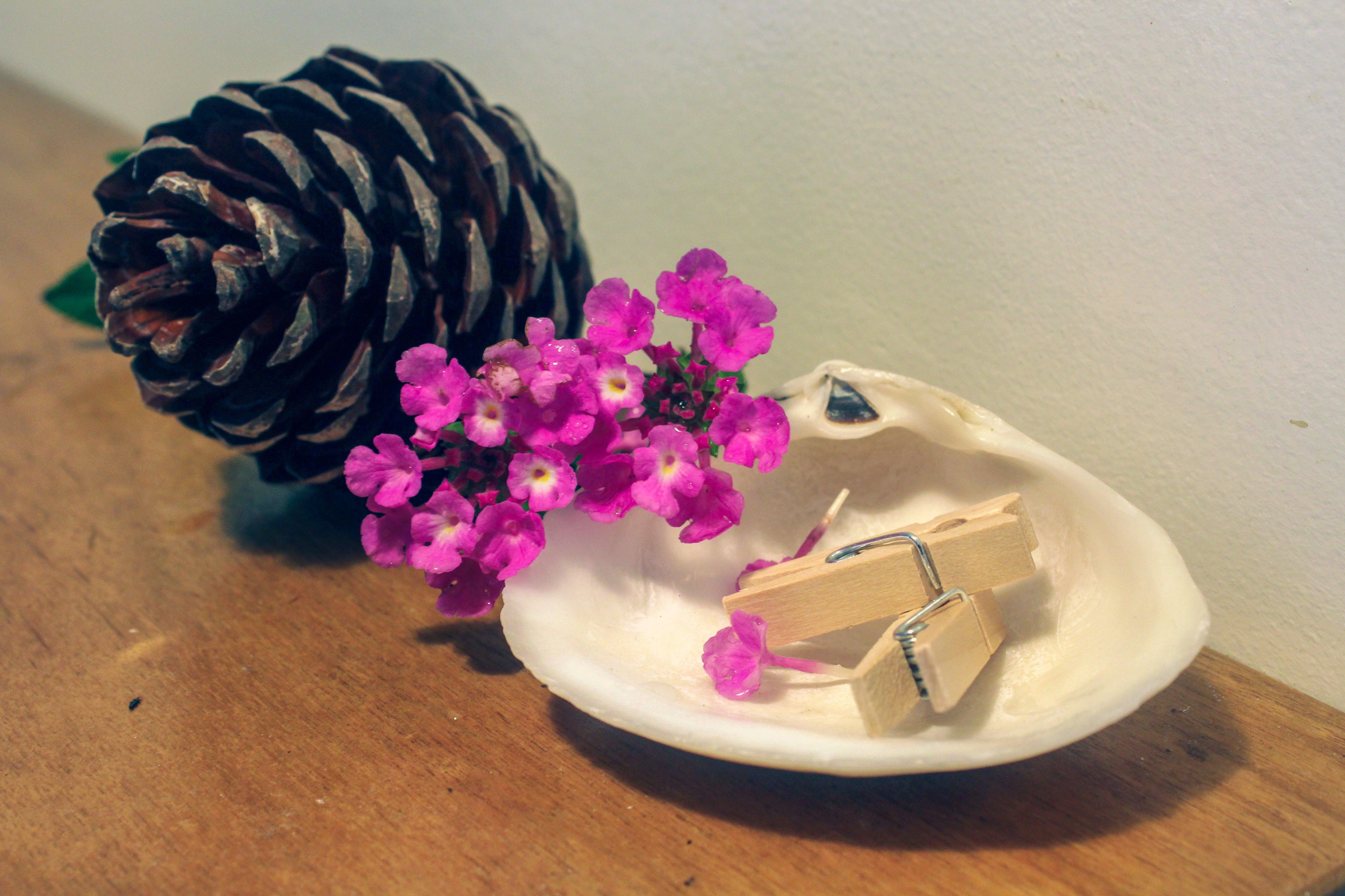Free stock photo of pegs, pinecone, wild flowers