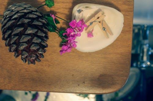 Gratis stockfoto met haringen, wilde bloemen pinecone