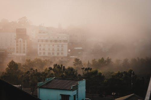 城市, 城鎮, 大叻, 松樹 的 免费素材照片
