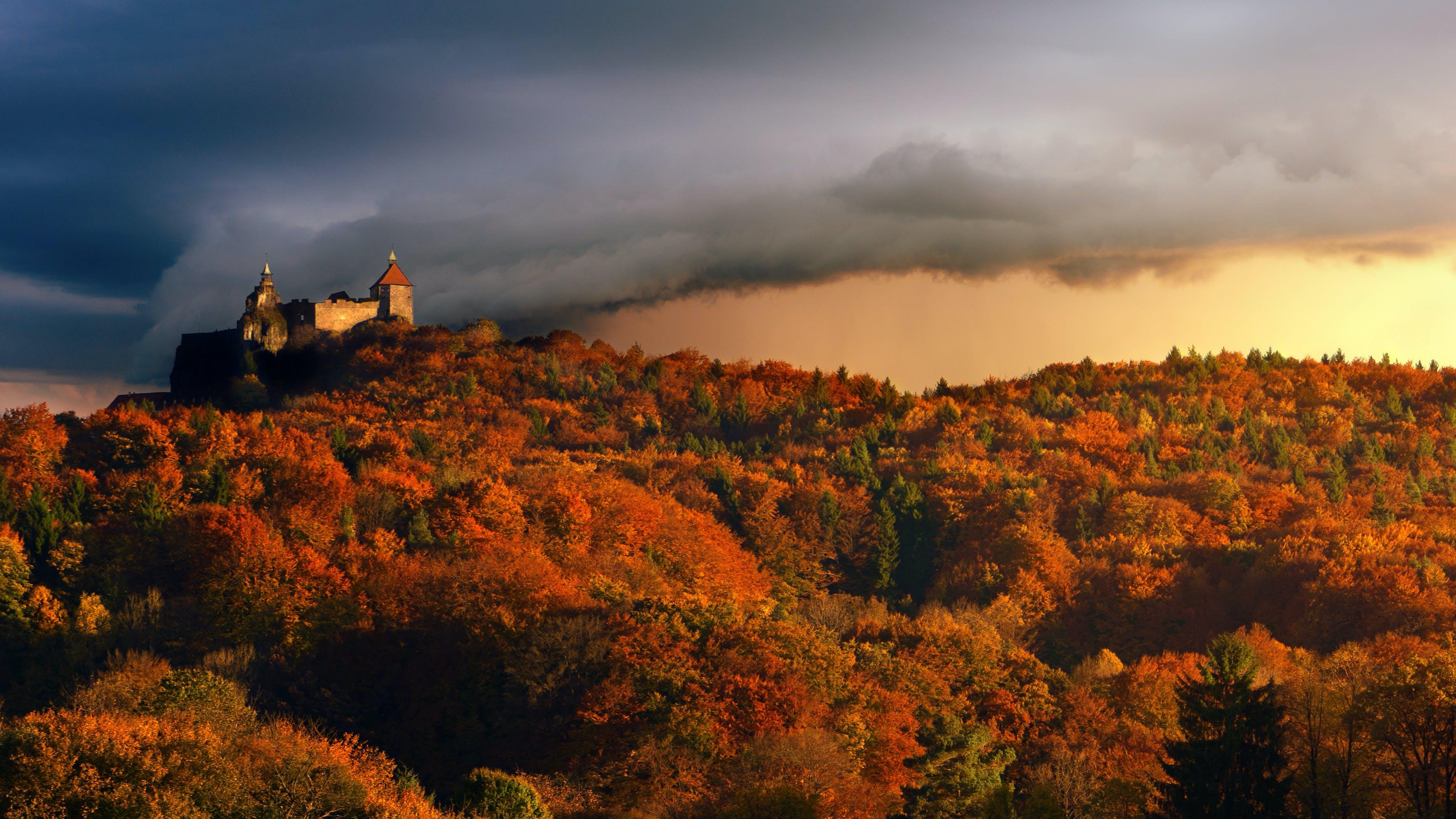 Gratis lagerfoto af borg, morgengry, træer