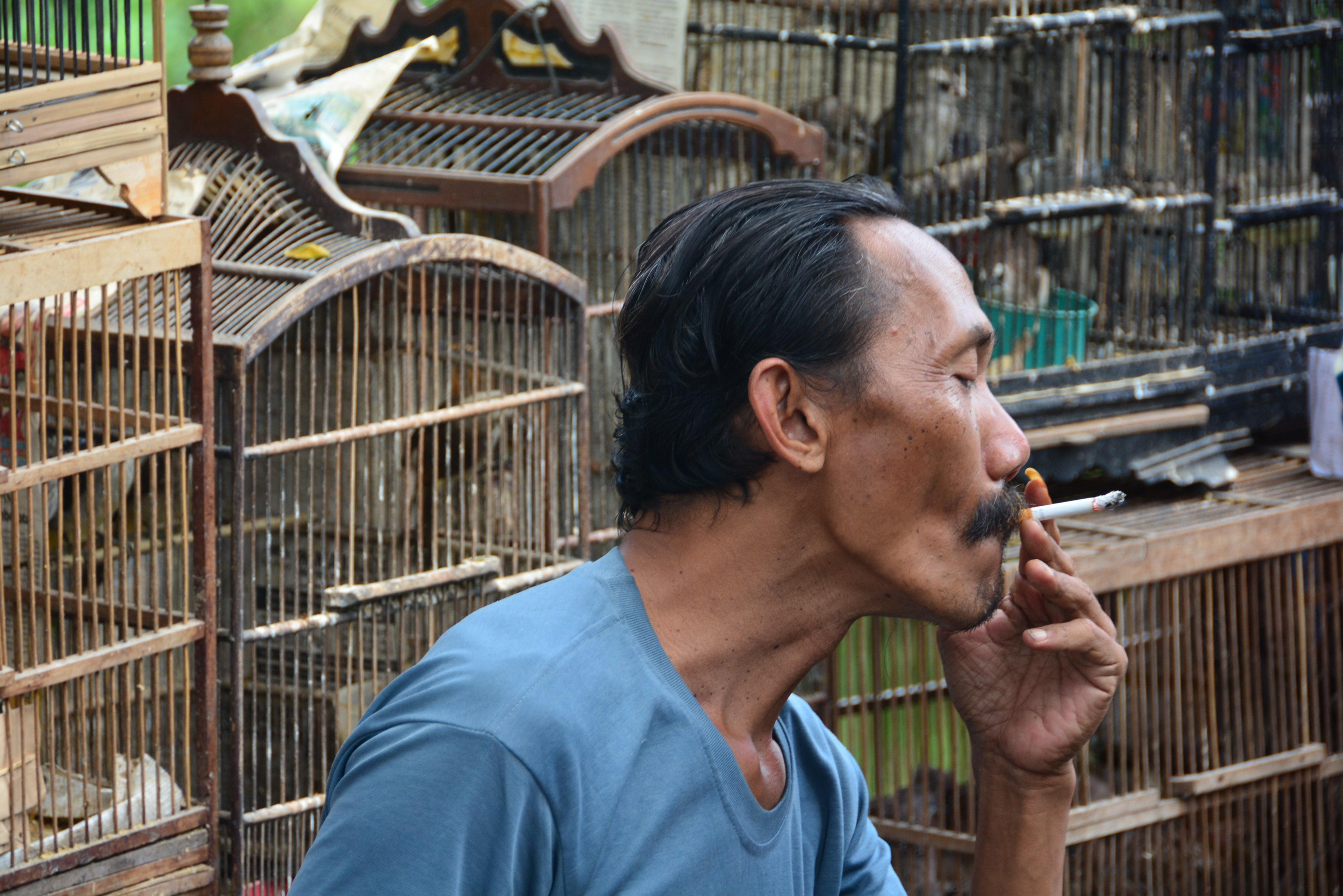 Free Stock Photo Of Birds Market Malang People