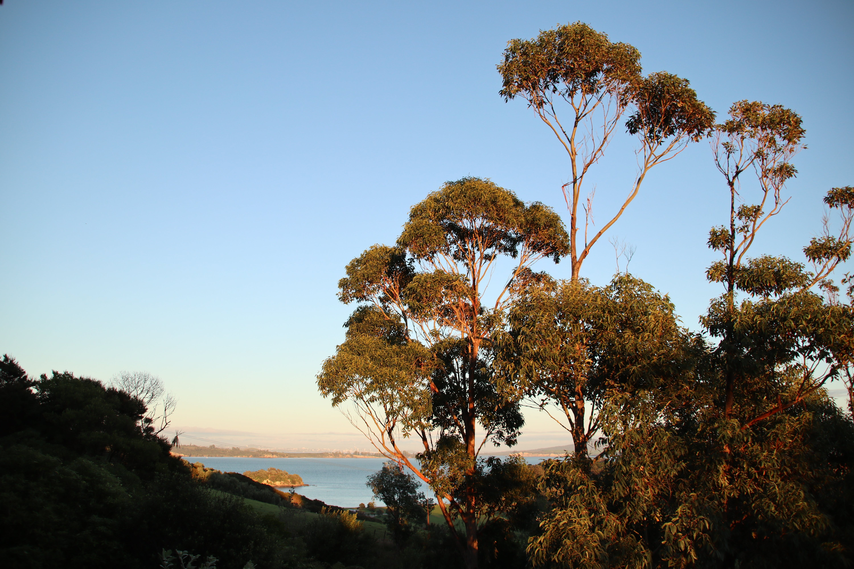 Free stock photo of early morning, tree