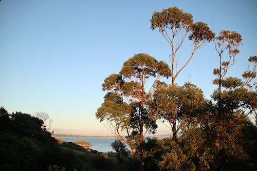 樹, 清晨 的 免費圖庫相片