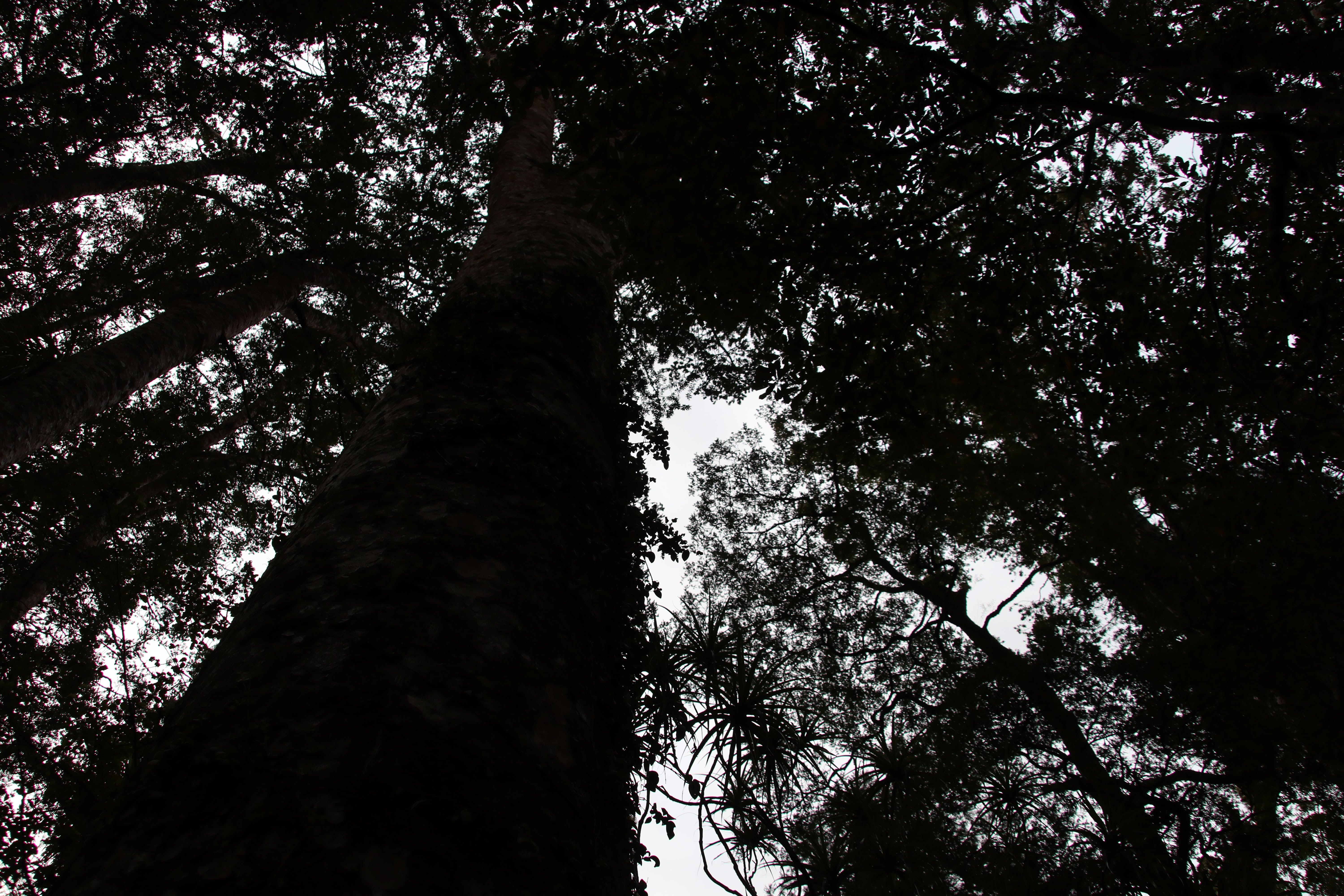 Free stock photo of #forest, tree