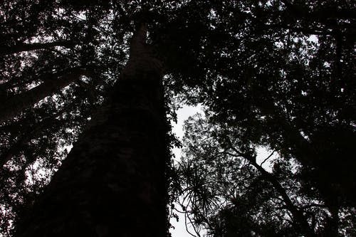 Základová fotografie zdarma na téma #les, strom