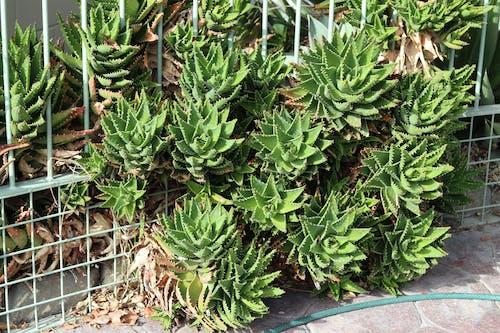 ngatea水上花園, 天性, 植物, 綠色 的 免費圖庫相片