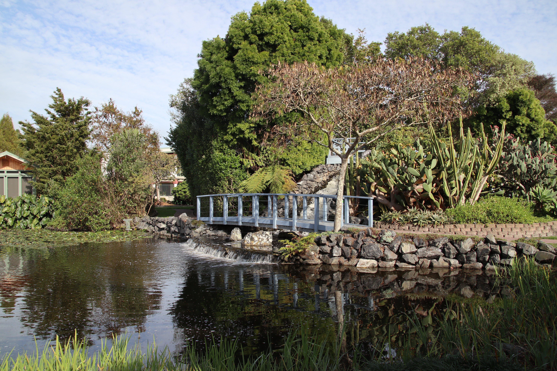 Free stock photo of garden, nature, Ngatea Water Gardens