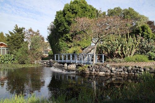 Základová fotografie zdarma na téma příroda, vodní zahrady ngatea, zahrada