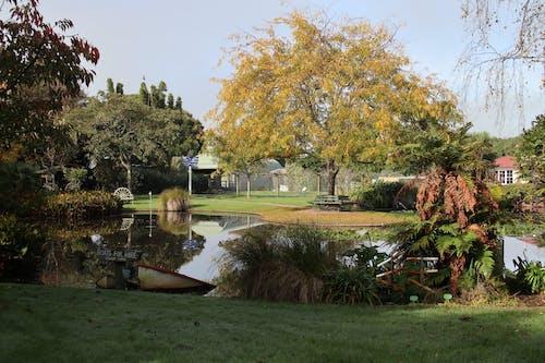 Základová fotografie zdarma na téma příroda, rostliny, vodní zahrady ngatea, zahrada