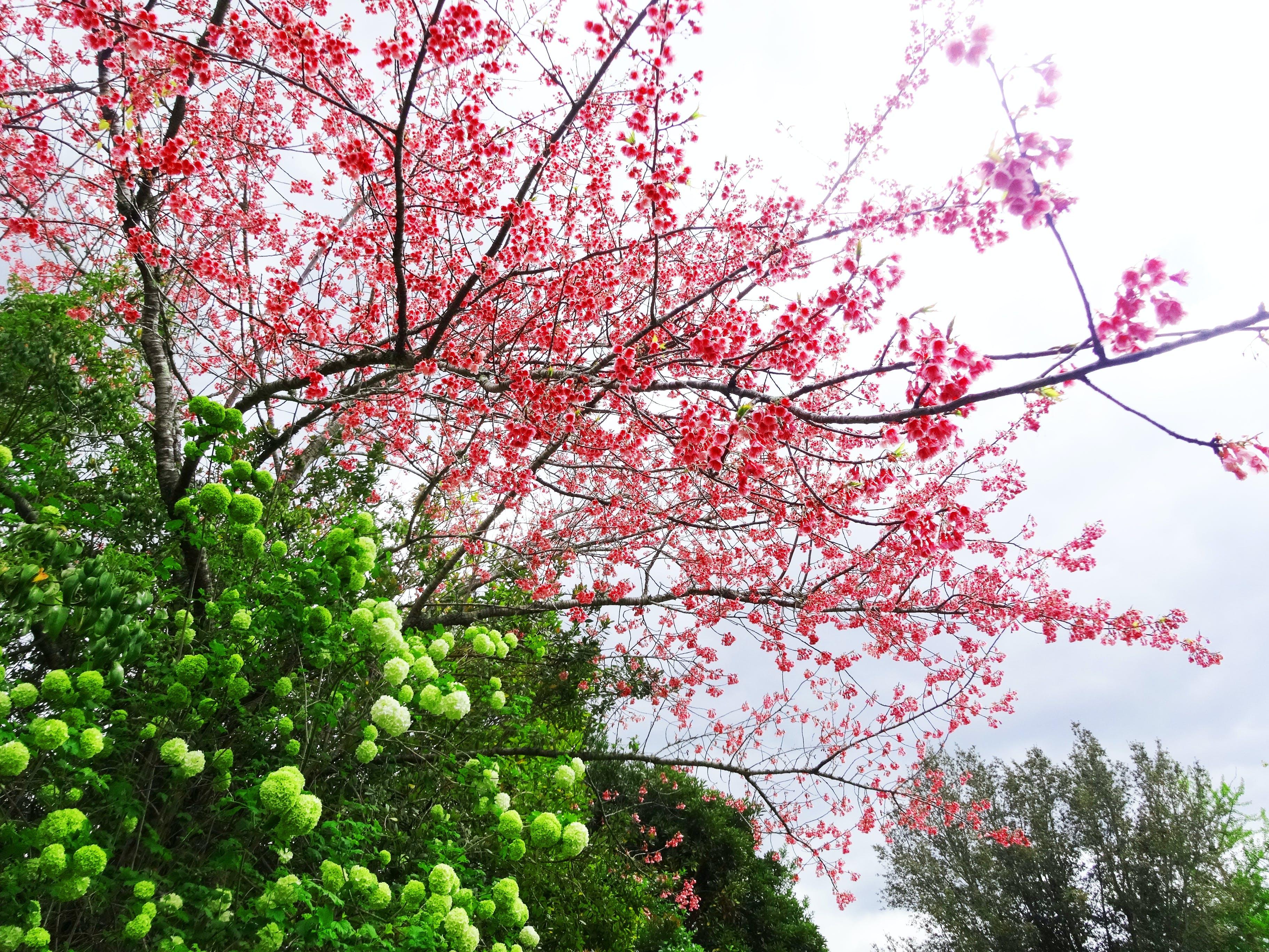 Free stock photo of flower, tree