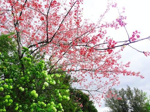 Základová fotografie zdarma na téma kytka, strom