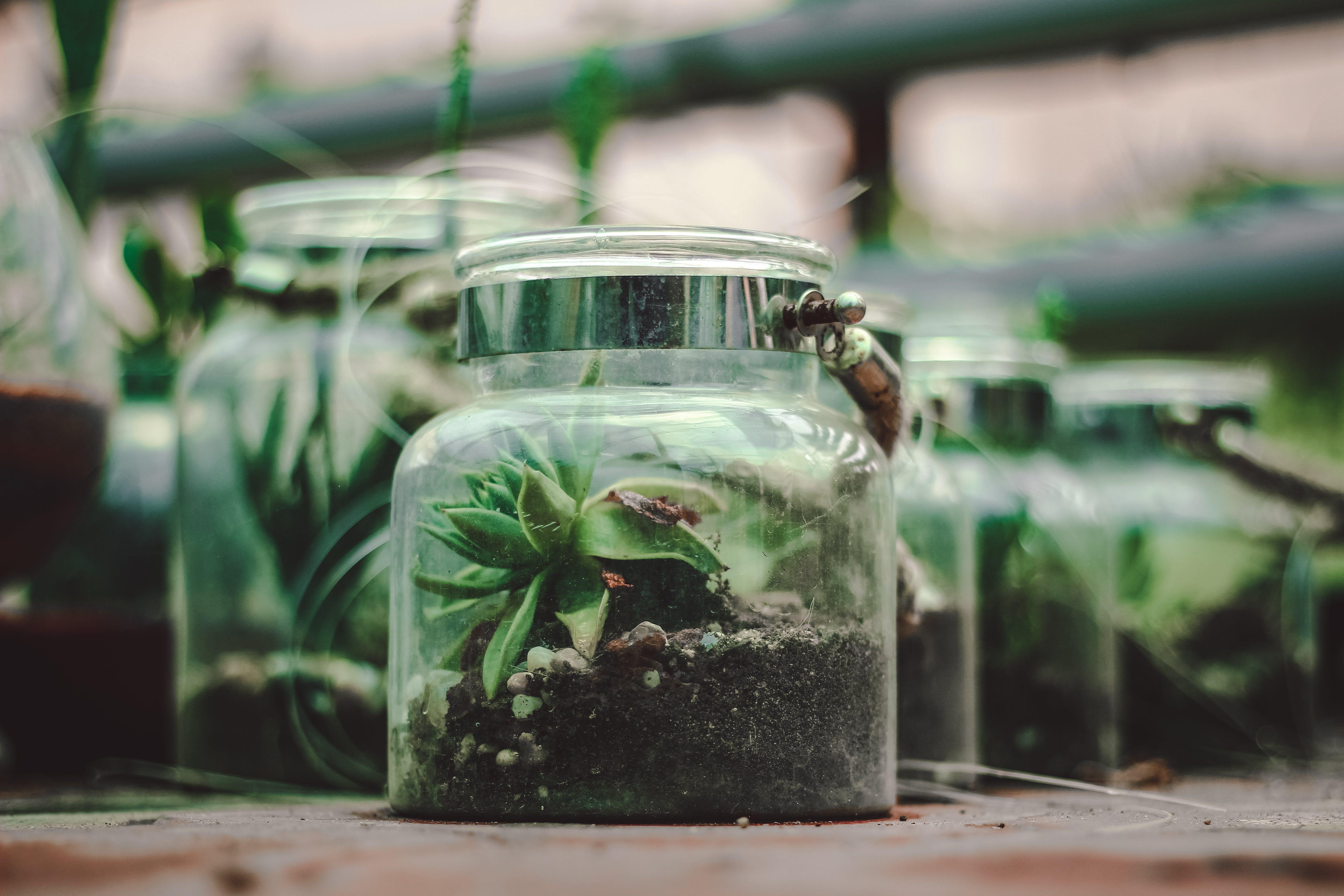 Kostenloses Stock Foto zu behälter, botanisch, farben, glas