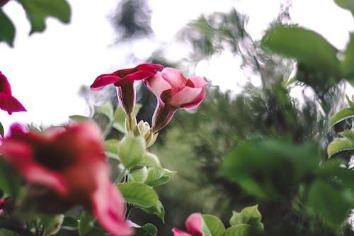 Photos gratuites de arrière-plan flou, botanique, brillant, couleurs