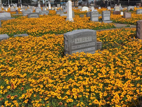 Free stock photo of cemetery, flowers