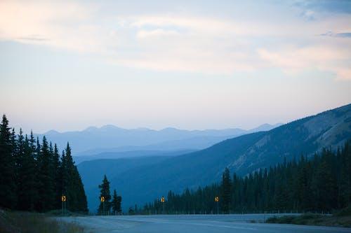 Imagine de stoc gratuită din arbori, ceață, cer, conifere