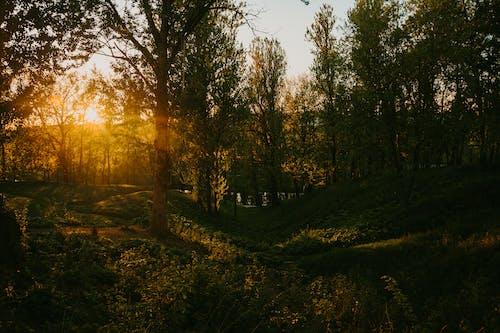 Ingyenes stockfotó erdő, fák, festői, gyárak témában