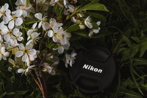 Безкоштовне стокове фото на тему «HD-шпалери, Nikon, Білорусь, весняні квіти»
