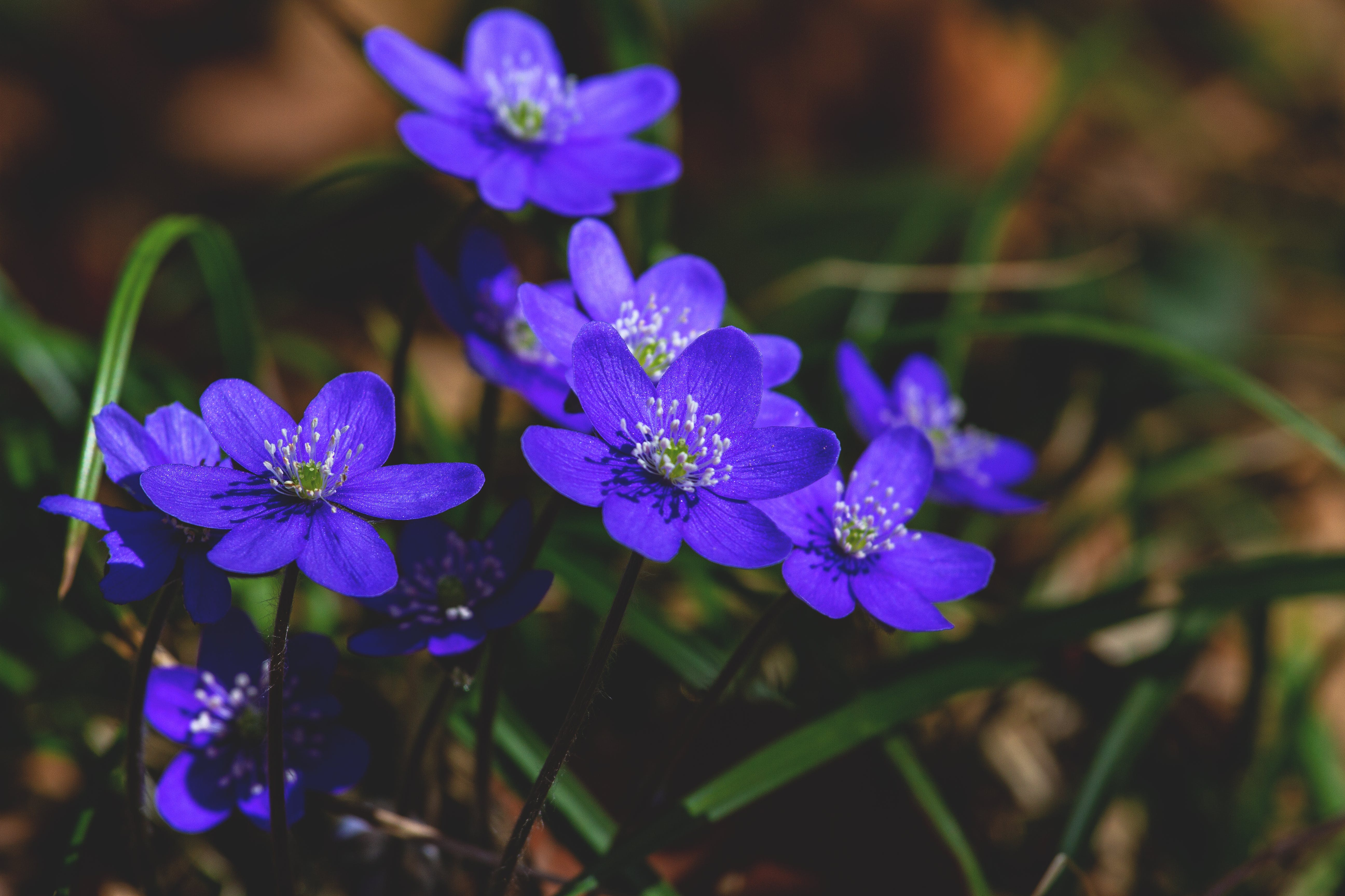 Close View of Purple Flowers
