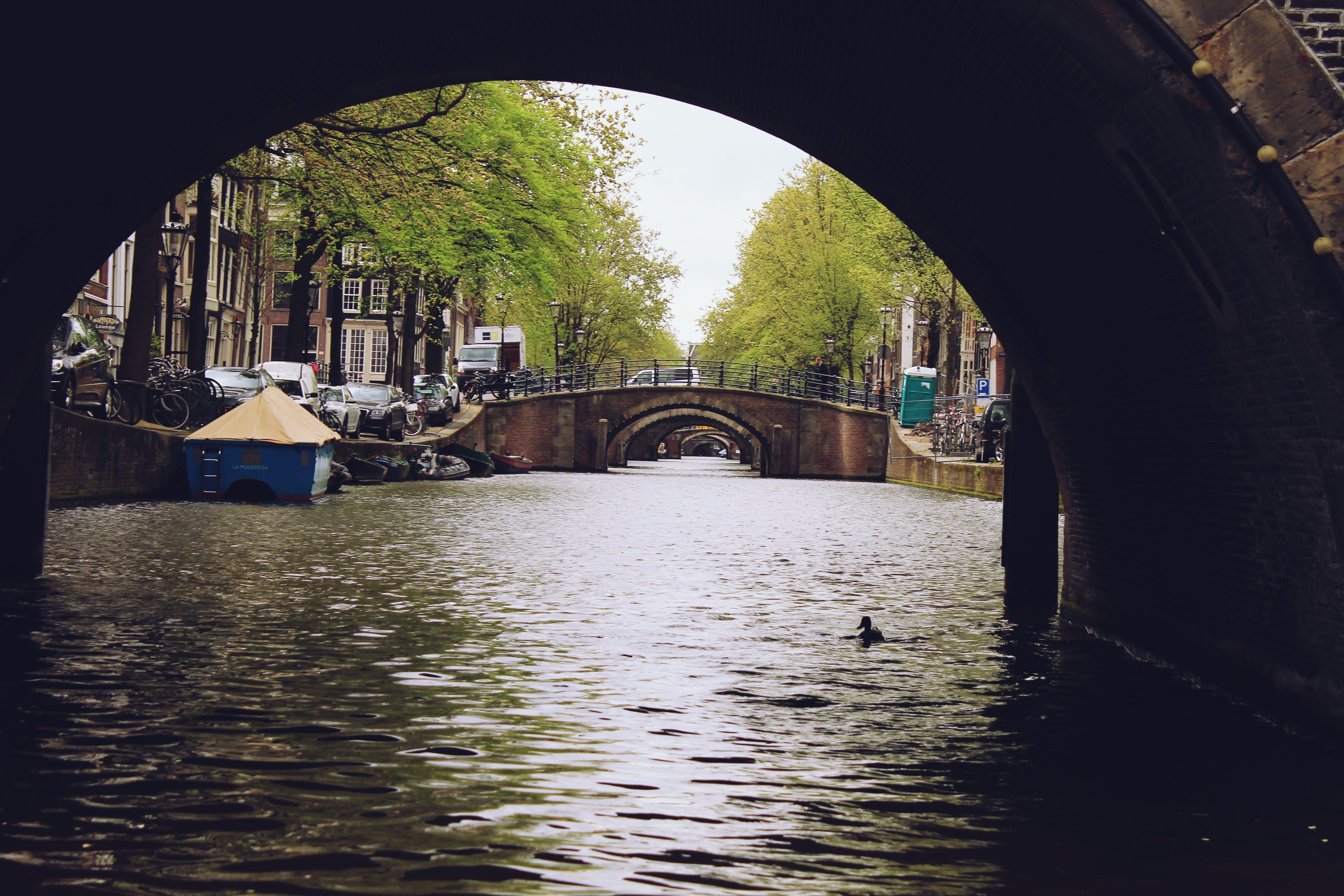 Δωρεάν στοκ φωτογραφιών με Άμστερνταμ, δέντρο, κανάλι, νερό