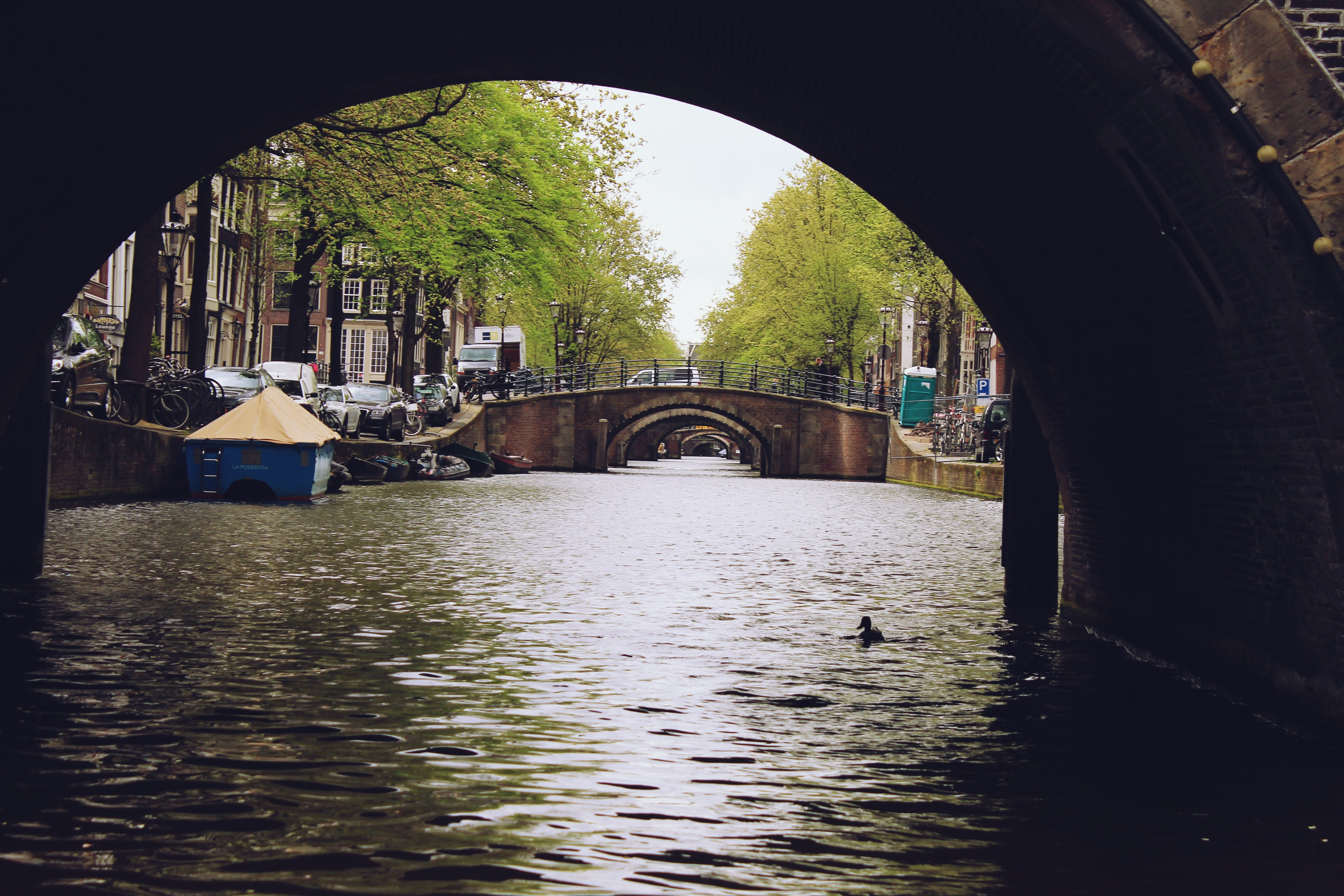 Free stock photo of water, canal, tree, amsterdam