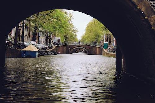 Kostenloses Stock Foto zu amsterdam, baum, holland, kanal