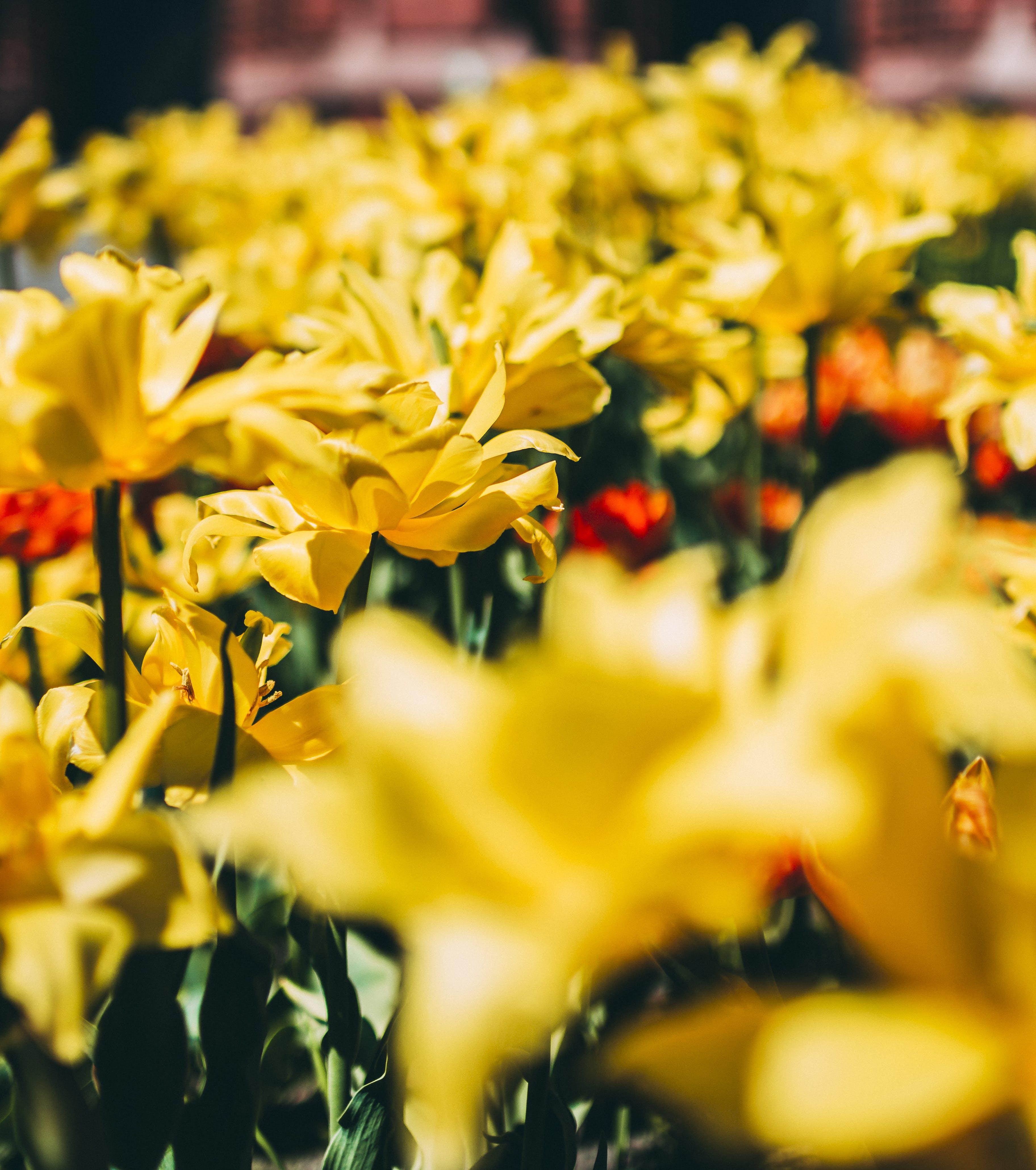 Kostenloses Stock Foto zu blühen, blumen, blüte, feld