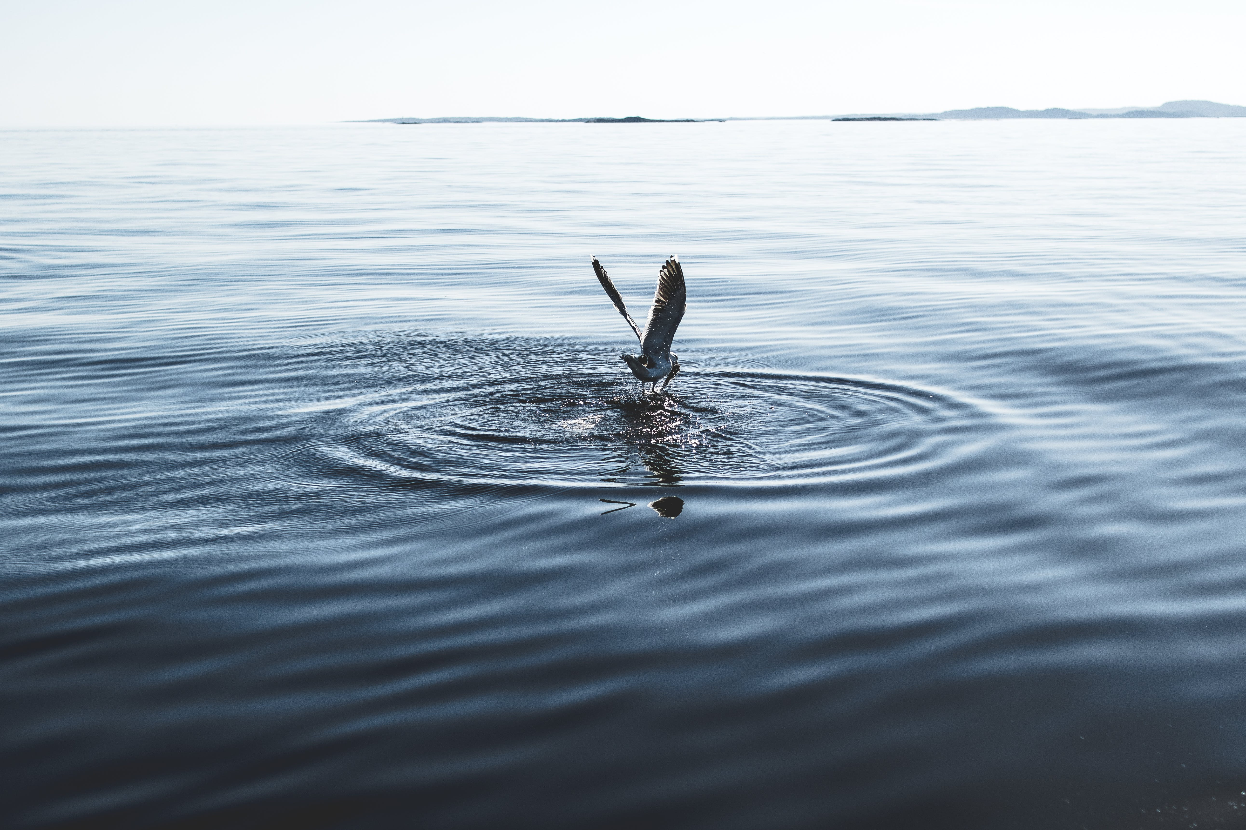White Pelican on Body of Water