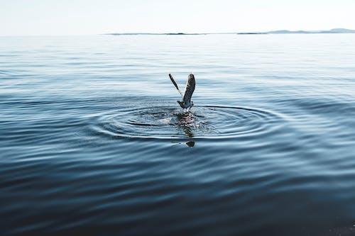 Fotos de stock gratuitas de acción, agua, alas, chapotear