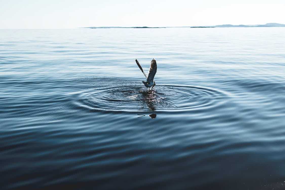 acción, agua, al aire libre
