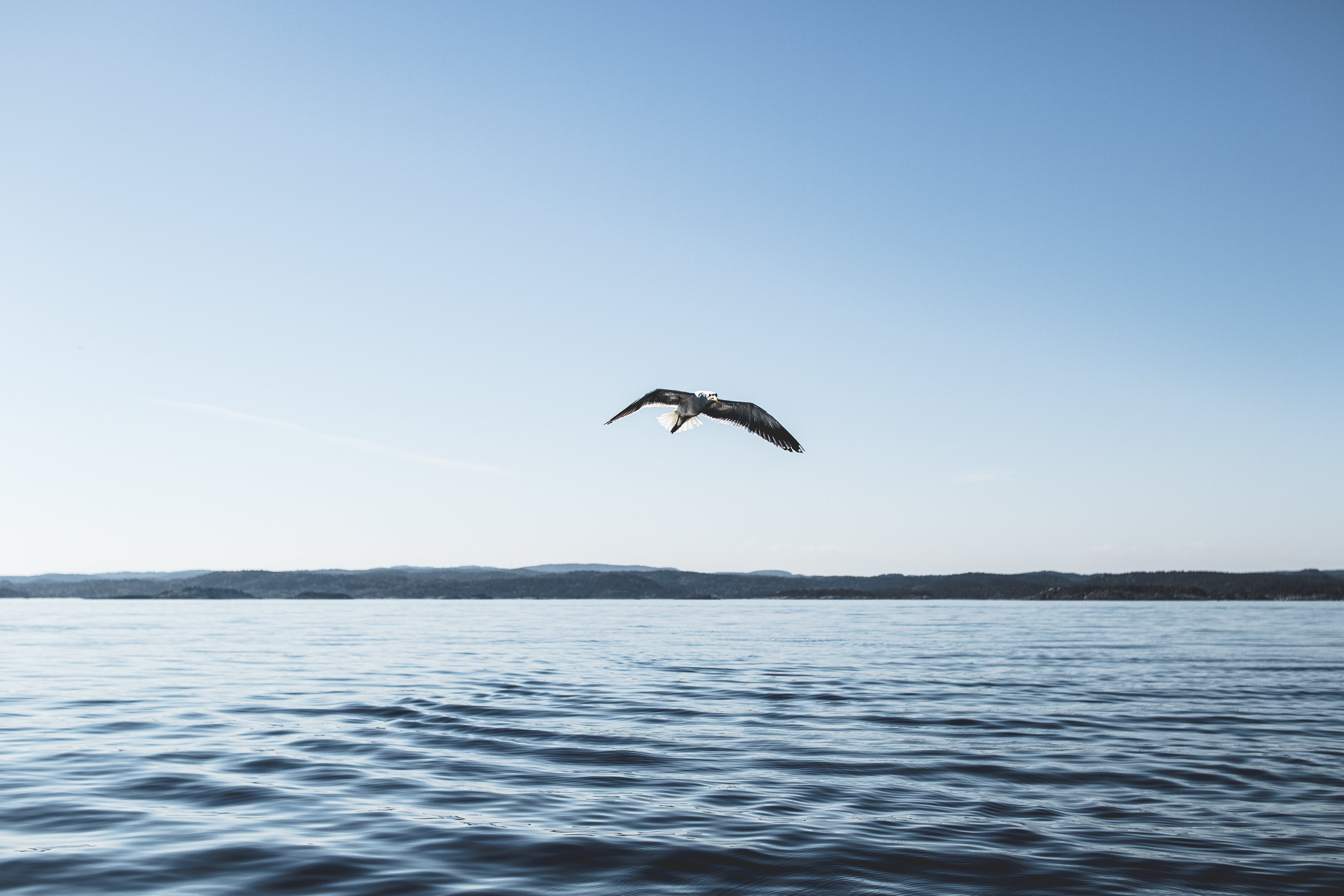 Low Angle Photography of Bird Flying Above Ocean