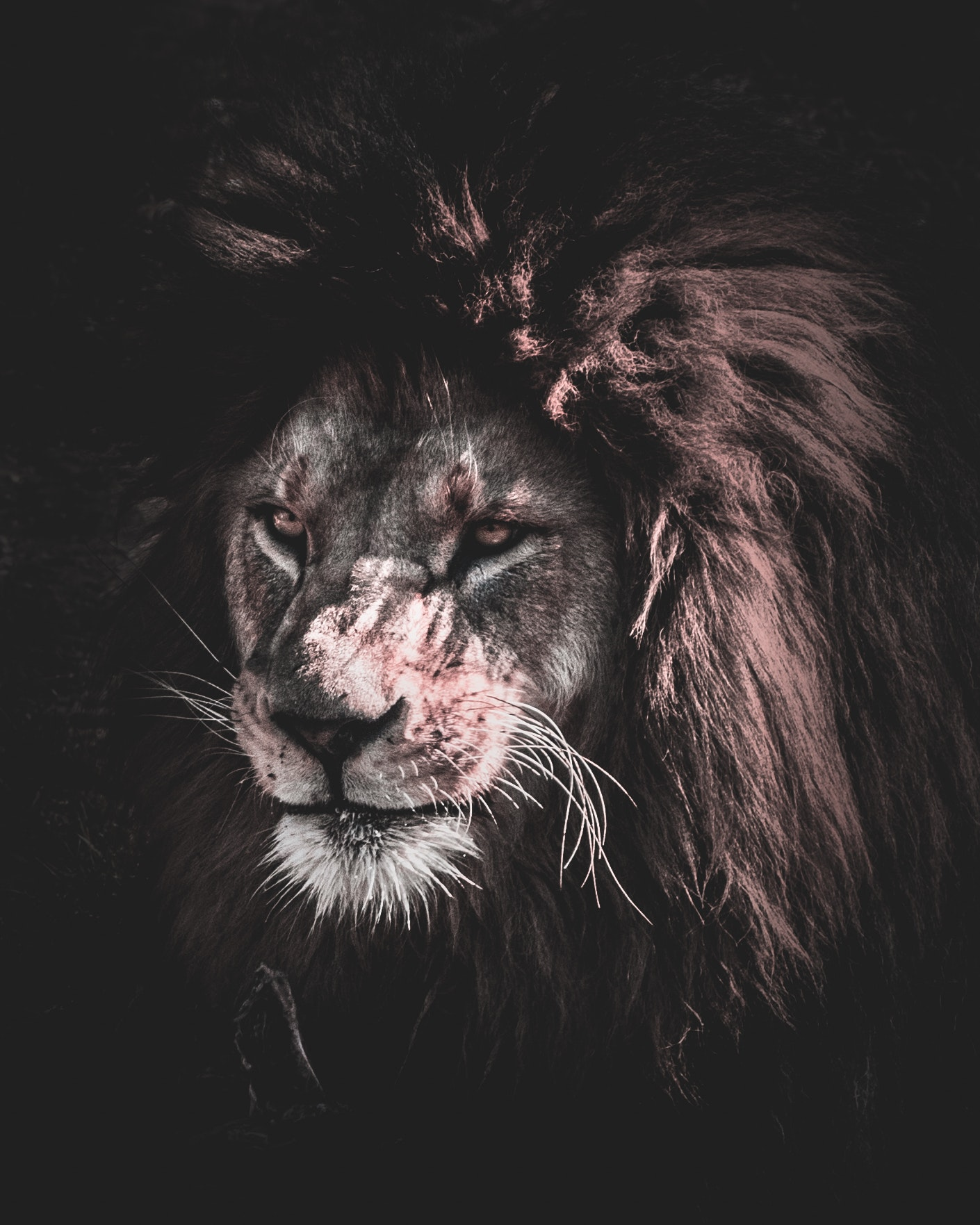 Lion Painting Free Stock Photo