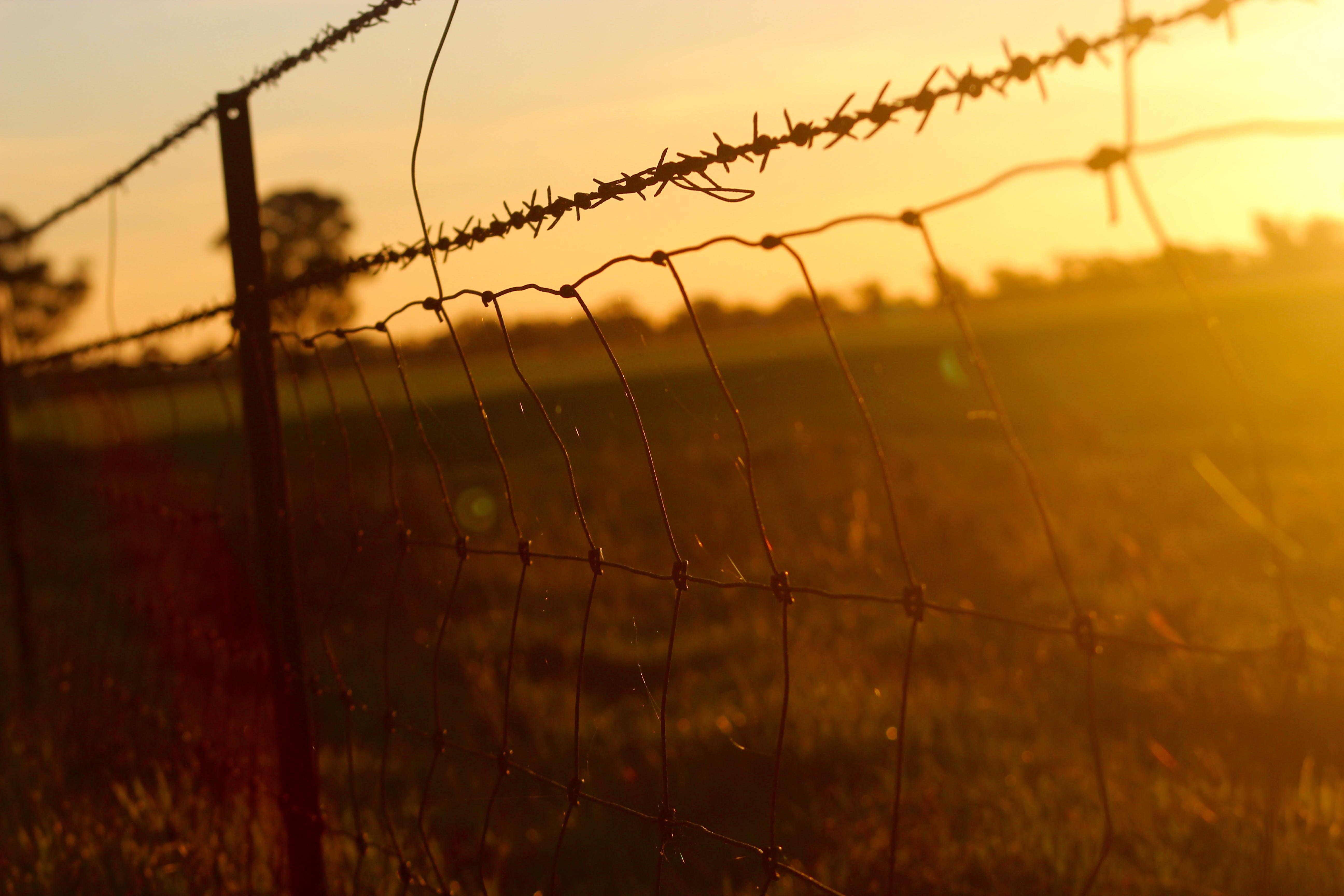 fægte, hegn, pigtråd