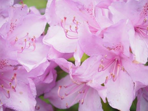 Бесплатное стоковое фото с завод, цветок