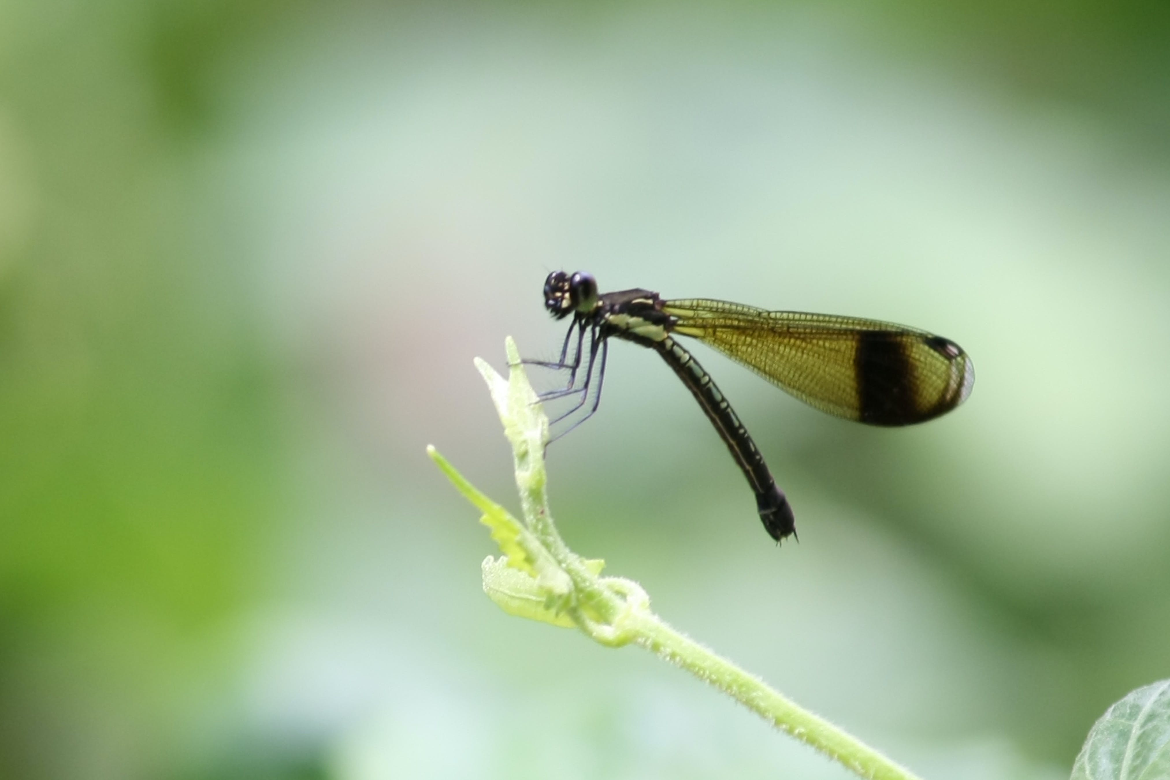 Green Dragonfly on Green Leaf during Daytime