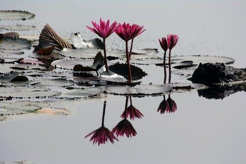 Ilmainen kuvapankkikuva tunnisteilla kaunis, kukka, luonto, päivänvalo