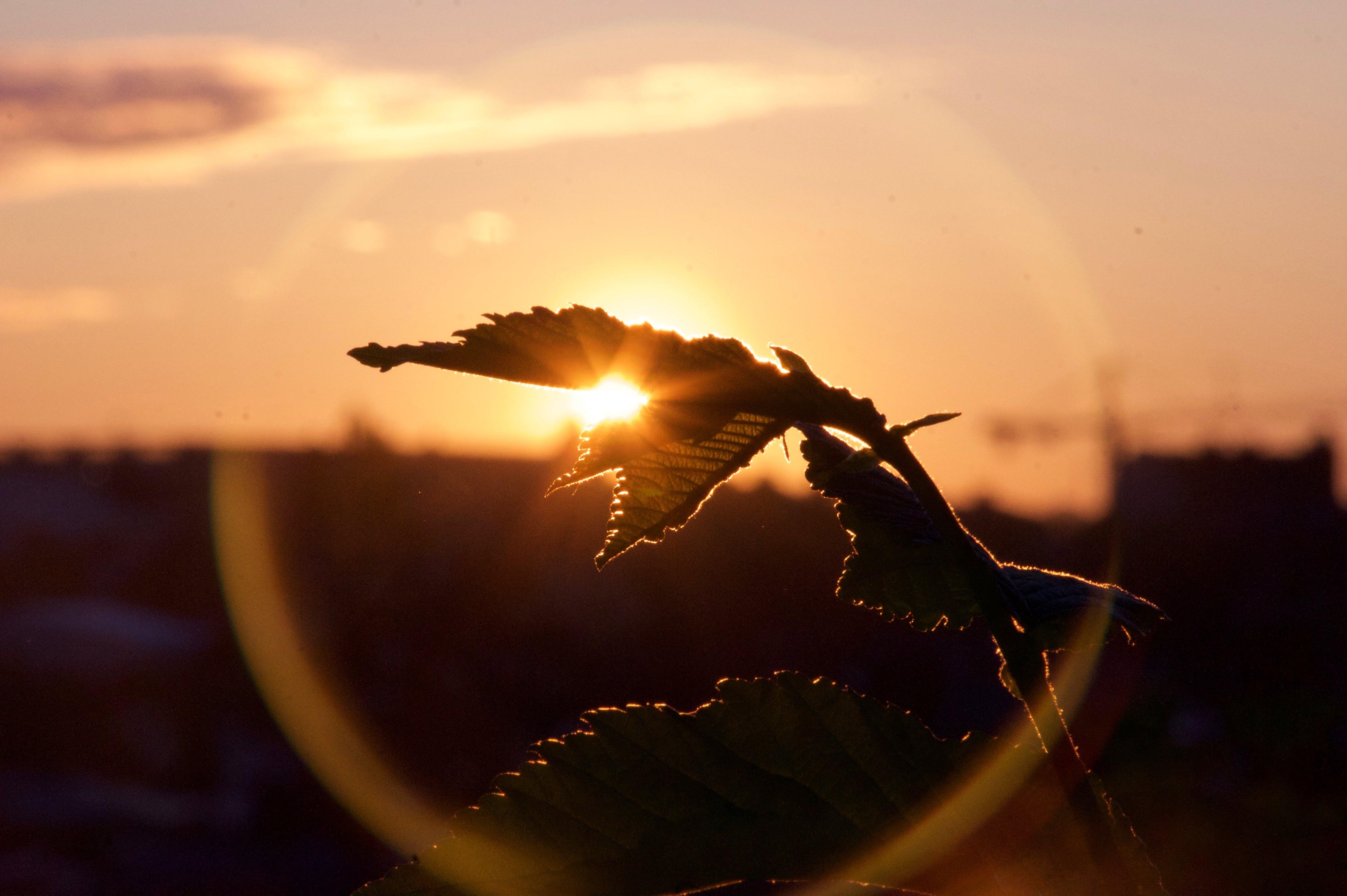 Free stock photo of sunrise, leaf